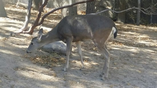 Wildhaven Ranch: Absolutely awesome close up (as safely possible) look at the wild animals