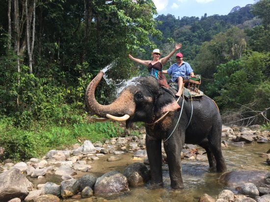 JC Tours: Elephant tekking