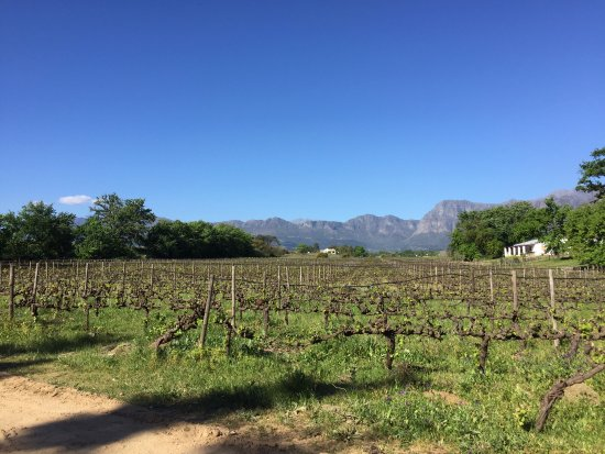 Klein Parys Vineyards