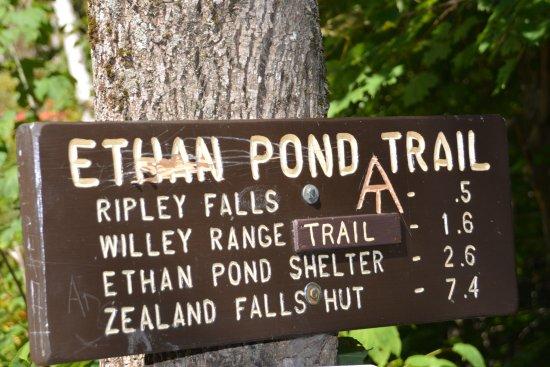 Hart's Location, Nueva Hampshire: Ripley Falls