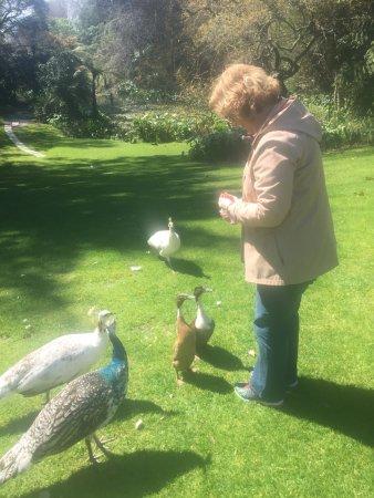 Katikati, Selandia Baru: Bird bombardment
