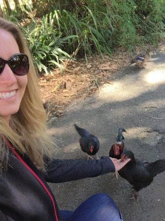 Katikati, Nieuw-Zeeland: Feeding the birds