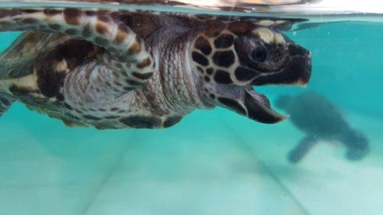 Gili Trawangan Turtle Hatchery