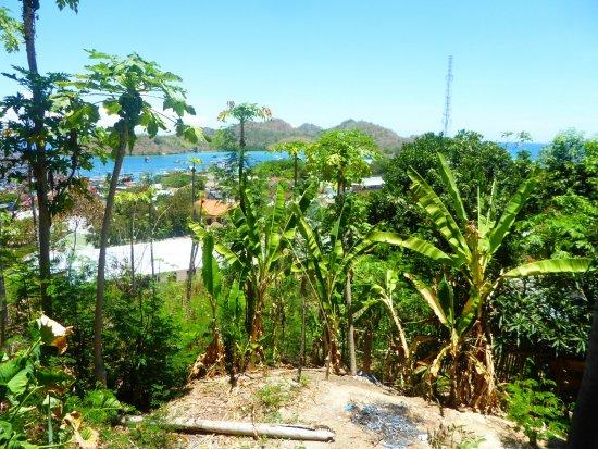 Palulu Garden Homestay