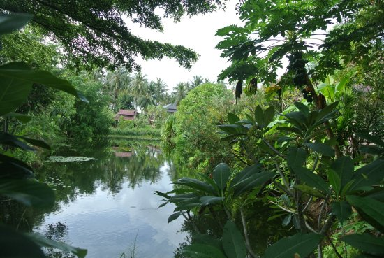 Siam Healing Centre: A view of our lakeside accommodation