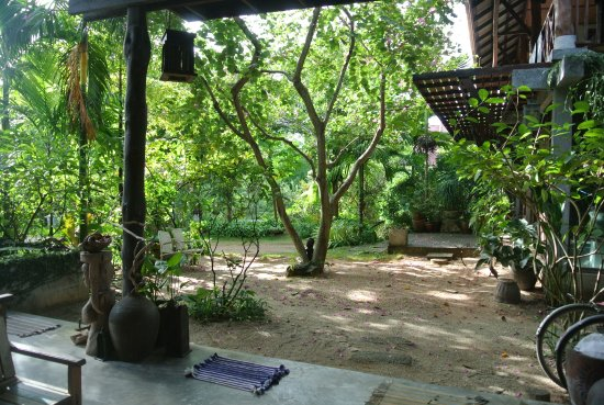 Siam Healing Centre: Our gardens are peaceful and have grown fast over the last few years!