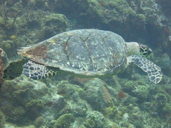 Bouillante, Guadeloupe: Reserve Cousteau