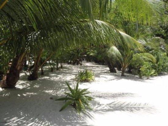 Kuramathi : pathway near Eco centre