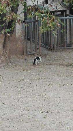 Beijing Zoo: Missing animals, horrible conditions
