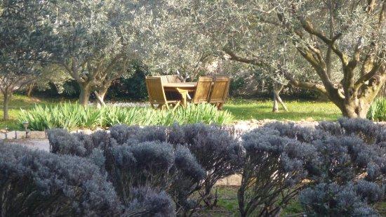 Le Mas de Gleyzes: jardin
