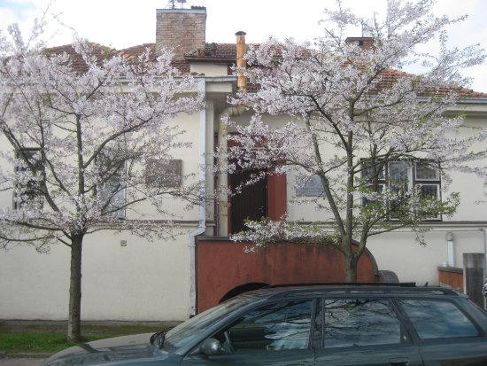Sugihara House