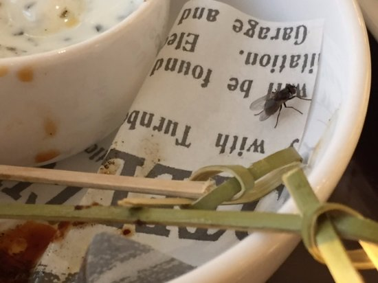 Turnberry, UK: Flies in Lounge and Restaurant