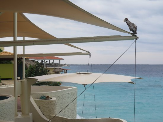 Rum Runners: Pelican sitting on the sails above the restaurant.