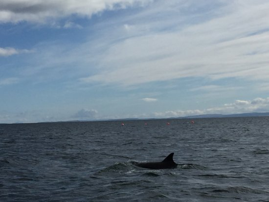 Cromarty, UK: Dolphins