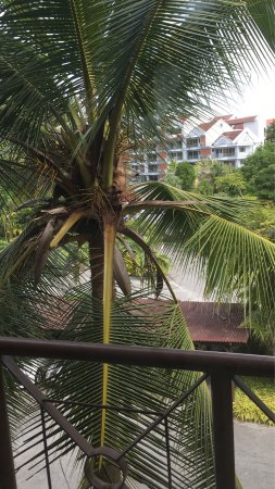 """Langkawi Lagoon Resort: Booked a """"room with view"""" and this is what we got. They argued that this is a view. So, a room w"""