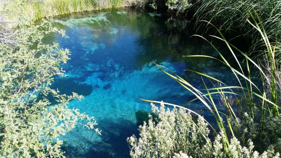 Amargosa Valley, NV: A crystal clear spring with pupfish, in the desert. This watershed is a beautiful place to visit
