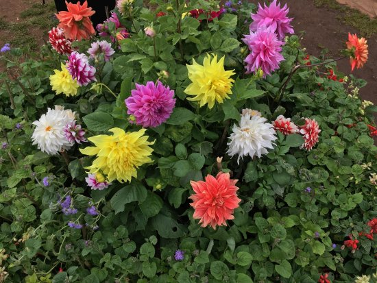 Colourful flowers steals the beauty of botanical gardenRare – Rare Garden Plants
