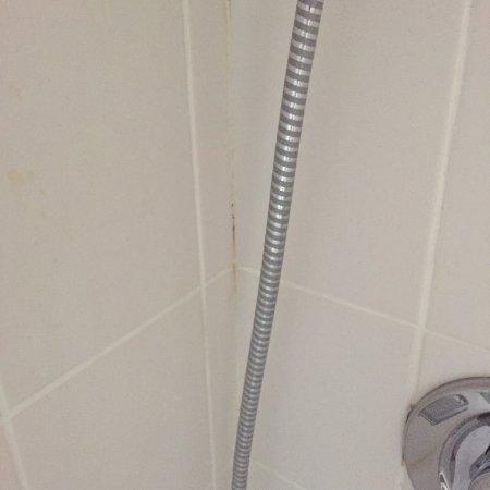 Badezimmer: Schimmel in den Fugen der Dusche - Bild von Stadthotel ...