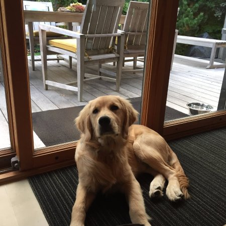 Manzanita, OR: our puppy near the sliding back doors of the Modern Ranch