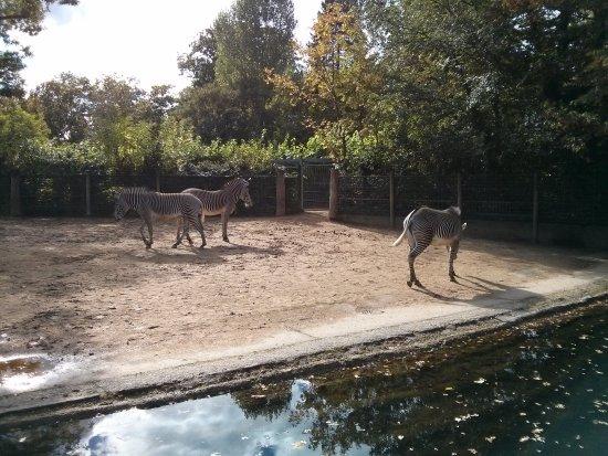Zoologischer Garten Frankfurt/Main: IMG_20161002_153433_large.jpg