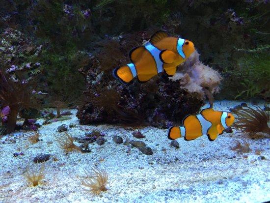 aquarium picture of aquarium le 7eme continent talmont hilaire tripadvisor