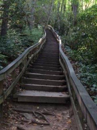 Mingo Falls: Must See