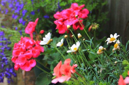 Aylesford, UK: tea garden summer 2016