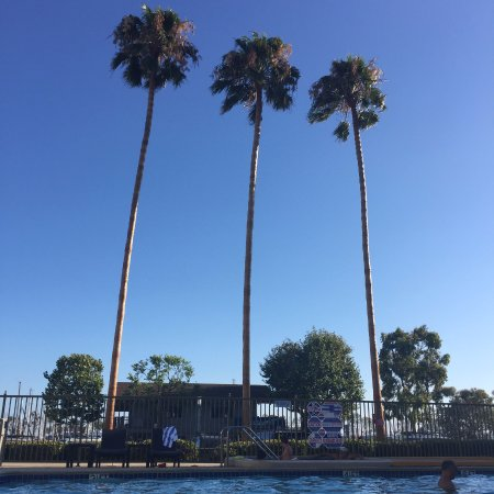 Dana Point, CA: Skinny Palm trees by the pool :)