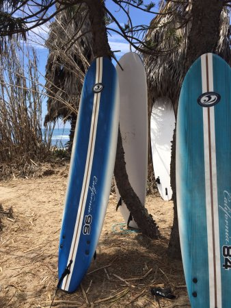 Dana Point, CA: surf safari