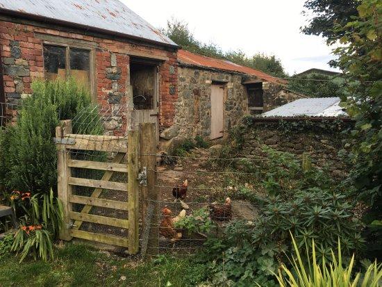 Staylittle B&B : It's literally a farm