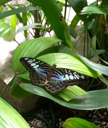 Branson, MO : The Butterfly Palace