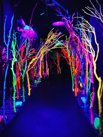 Walking Around House Of Eternal Return Inspired By All That I Saw Picture Of Meow Wolf Santa Fe Tripadvisor