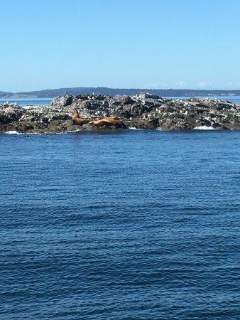 San Juan Islands, Etat de Washington : photo0.jpg