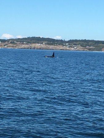 San Juan Islands, Etat de Washington : photo3.jpg