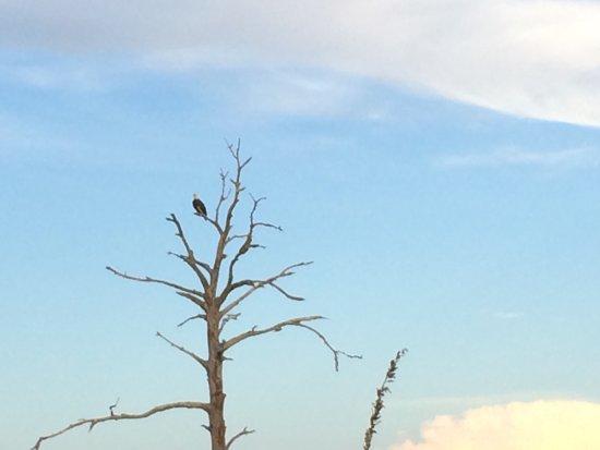 Alligator Point, FL: photo8.jpg