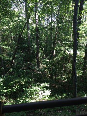 Smithville, TN: photo2.jpg
