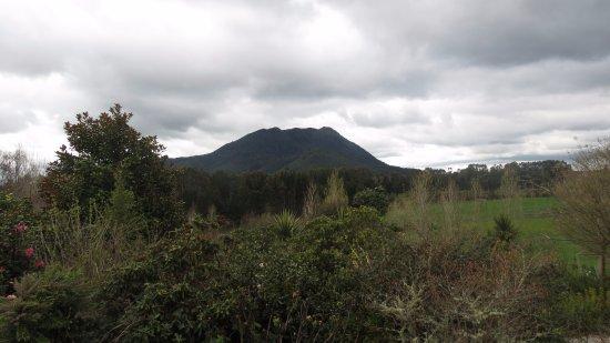 Kauri Point Φωτογραφία