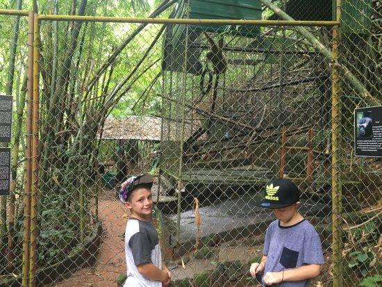 Gibbon Rehabilitation Project Bild