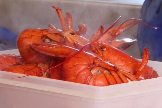 Ryer Lobsters: Steaming fresh lobsters for take out