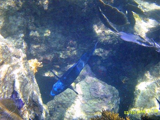 Foto de Reef Roamer Snorkel
