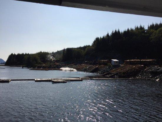 Gold River, Canada: photo6.jpg