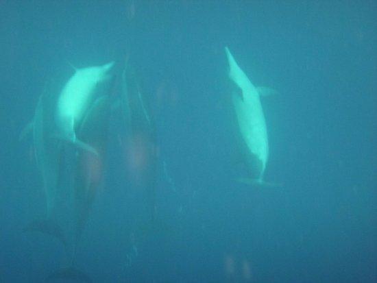 Honaunau, Hawái: spinner dolphins - spinning.