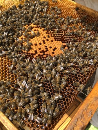 Huete, España: Tienda Miel Pósito Real, con productos de la Alcarria. La miel es natural, artesana, sin conserv