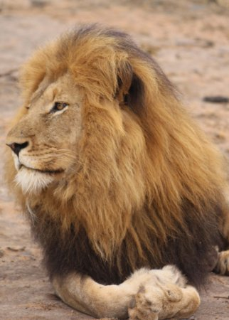 Amakhosi Safari Lodge: On game drive
