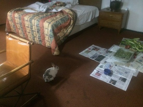Port Hueneme, Californië: My rabbit, Narvik; loved our hotel room....