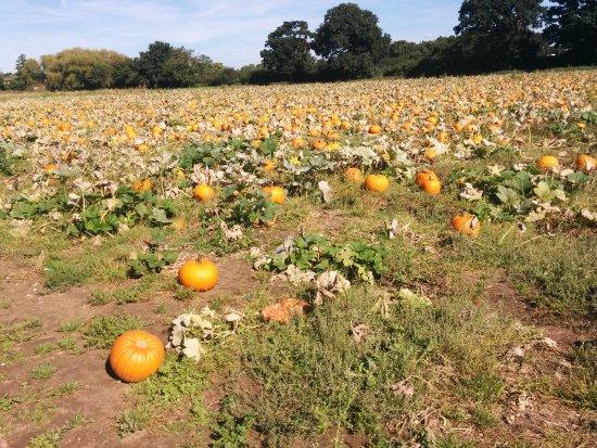 Esher, UK: pumpkins