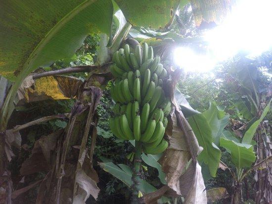 Matavera, Ilhas Cook: GOPR0368_1475033050958_high_large.jpg