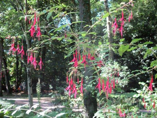 Saint-Cyr-en-Talmondais, Francia: Fleurs tropicales