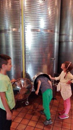 Corneliano d'Alba, إيطاليا: vasche vino