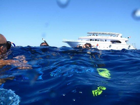 Shehab Diving Center